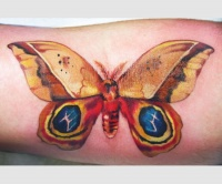 Tattoo yellow butterfly